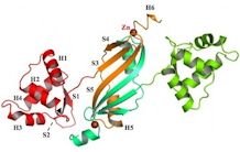 Crystal structure of the apo-PerR-Zn protein from Bacillus subtilis